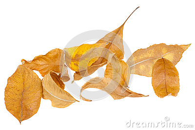 Dried autumn leaves