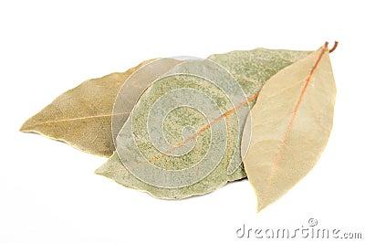 Dried Bay (Laurel) Leaves