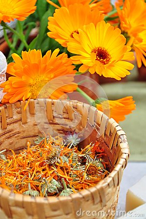 Free Dried Calendula Herbs Royalty Free Stock Images - 26530209
