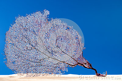 Dried coral reef sea fan on sand.