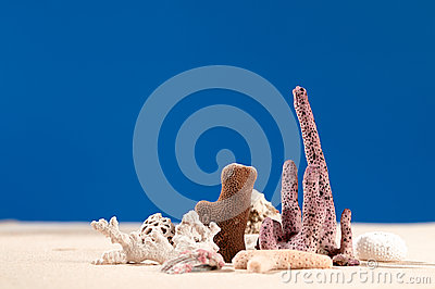 Dried corals and shell on sand