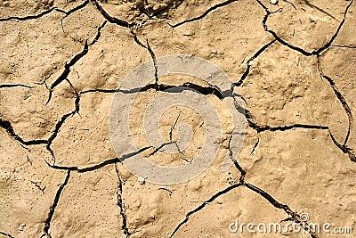 Dried earth