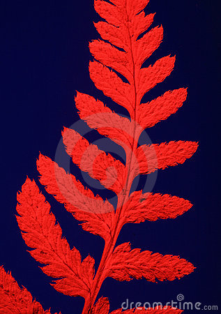 Dried Fern with Red Filter