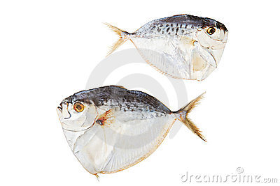 Dried Fish Stock Image - Image: 18937541