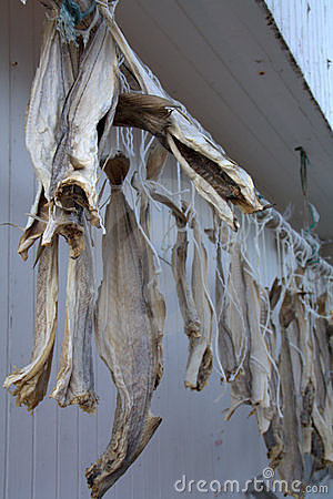 Dried fish on a line
