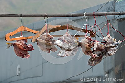 Dried fishes on the bar