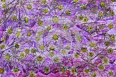Dried flower background