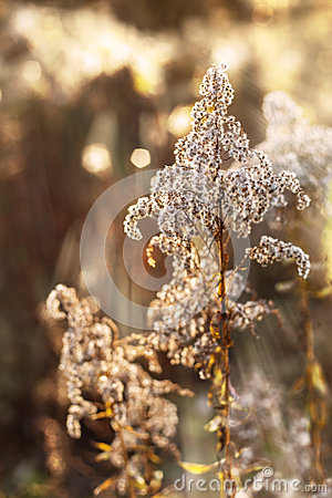 Free Dried Flowers And Plants. Royalty Free Stock Photos - 61635508