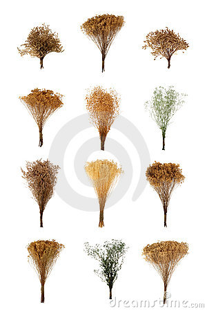 Dried Flowers Bunch Collection Montage Isolated