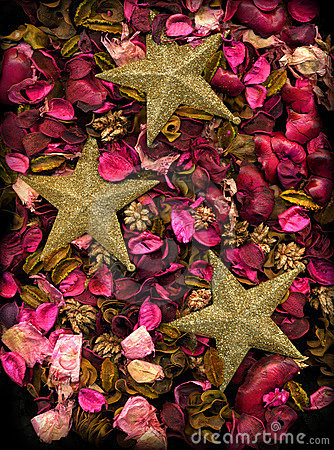 Dried flowers & Gold Stars