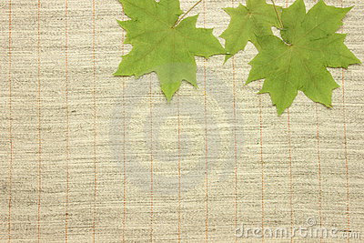 Dried green leaves