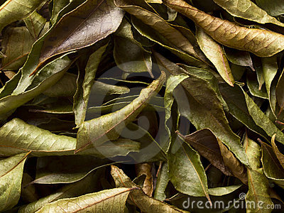 Dried indian curry leaves