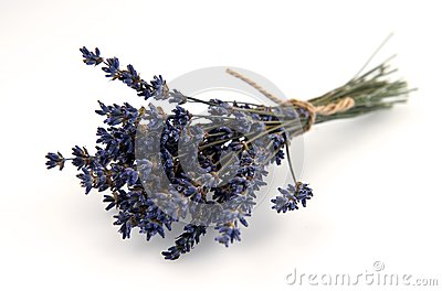 Dried Lavender Bouquet Isolated on White Background