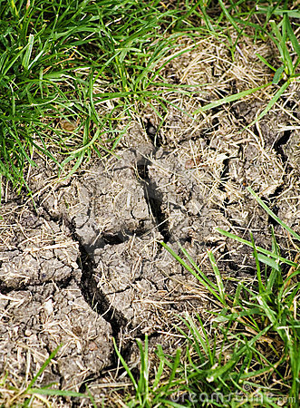 Dried Lawn Stock Photo - Image: 2652680