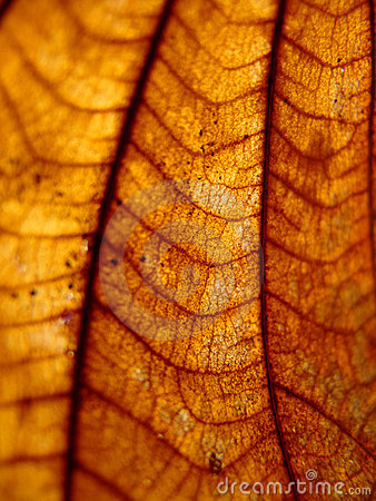 Free Dried Leaf Closeup Stock Photography - 16376312