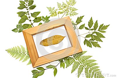 Dried leaf in a frame