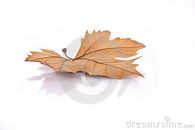 Dried leave