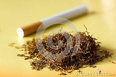 dried tobacco & Dried Tobacco - gal-tobac