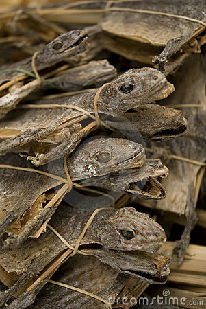 Dried lizards in market singapore asia