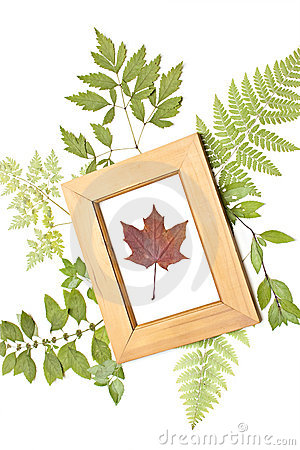 Dried maple leaf in a frame