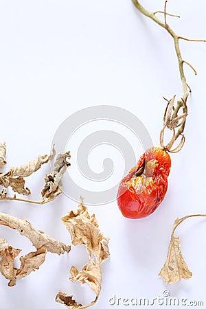 Dried mini tomato