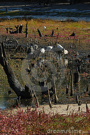 Free Dried Out Billabong Royalty Free Stock Photo - 2347635