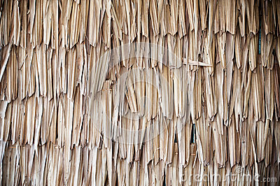 Dried Palm Texture Stock Images Image 27642194