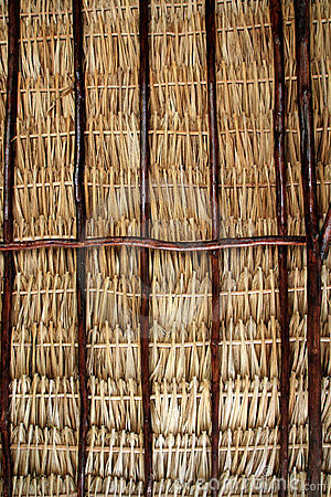 Dried palm tree leaves palapa roof and beams