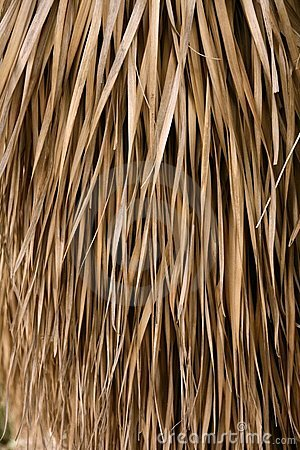 Free Dried Palm Tree Leaves Tropical House Roof Stock Images - 12867414