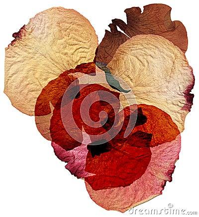Free Dried Rose Petals Royalty Free Stock Photos - 4748298