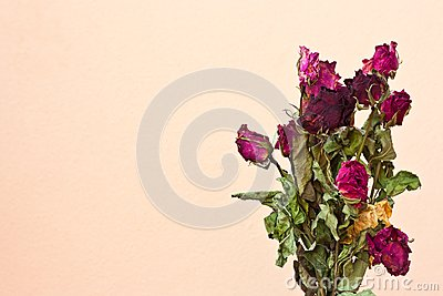 Dried roses