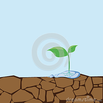 Free Dried Soil And Seedlings.Sapling Growing From Arid Land Royalty Free Stock Image - 93977986
