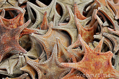 Dried Starfish