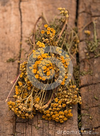 Free Dried Tansy Branches Royalty Free Stock Photography - 29528117