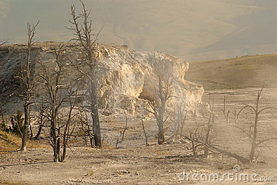 Dried trees and hot springs