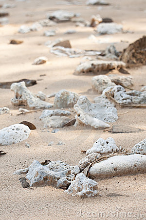 Dried up coral on shiluokou beach