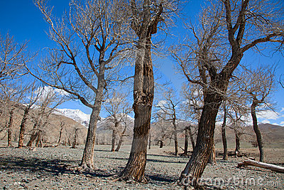 Dried-up river bed