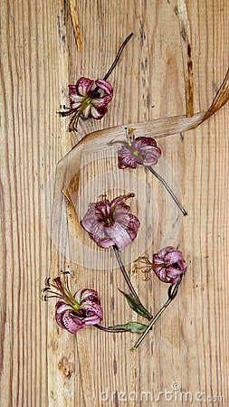 Free Dried Wilted Lilies On A  Dark Wooden Surface Stock Images - 105816894