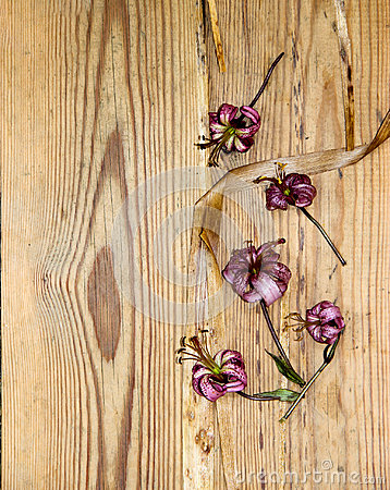 Free Dried Wilted Lilies On A  Dark Wooden Surface Stock Photography - 95757652