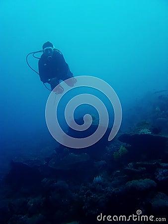 Drift dive scuba diver sabang philippines