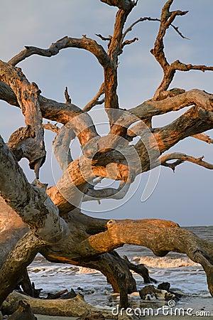 Drift wood at the ocean beach.