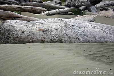Drift wood and sand