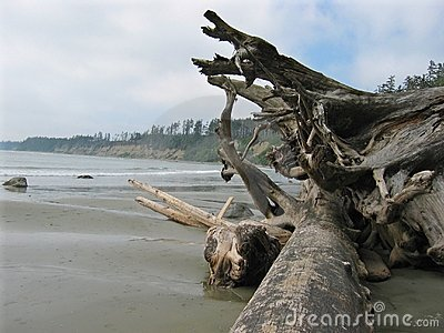 Driftwood along coast