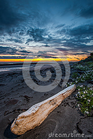 Free Driftwood At Beach Royalty Free Stock Photography - 43402077