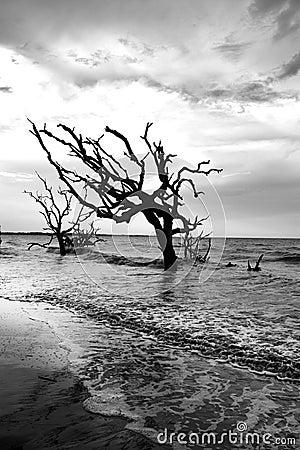 Free Driftwood Beach Royalty Free Stock Photo - 107267695