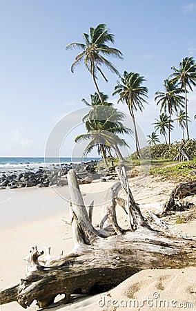 Driftwood  beach Corn Island Nicar