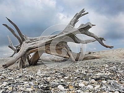 Driftwood Beast