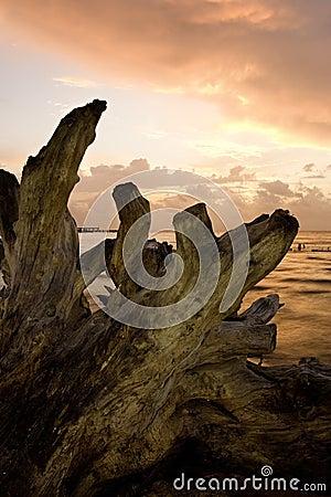 Driftwood en el amanecer