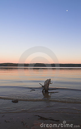 Driftwood in lake at sunset