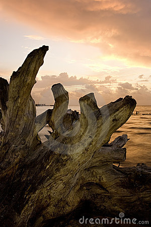 Driftwood no alvorecer